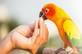 Βιταμίνες απαραίτητες και για τα πουλιά