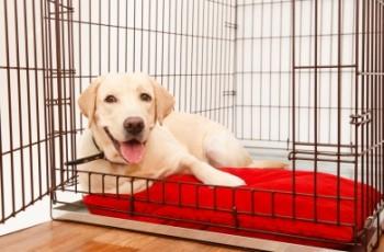 Γιατί πρέπει να χρησιμοποιείς crate για τον σκύλο σου
