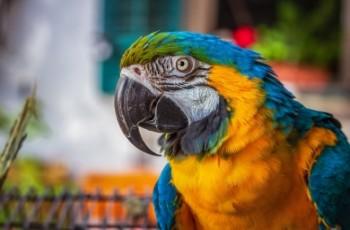 Macaws, οι μεγαλύτεροι και εντυπωσιακότεροι παπαγάλοι